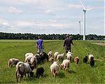 Zorgboerderij de Diek